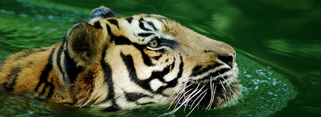 Sundarban Tour Safari in Launch